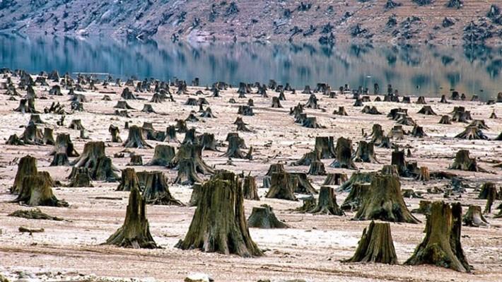 10 imágenes que demuestran que nuestro mundo está condenado. Talación/Deforestación