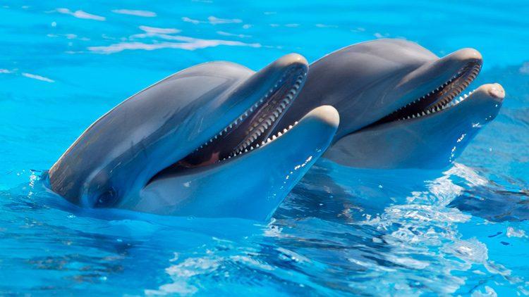 Barcelona quiere ser una ciudad libre de delfines en cautividad
