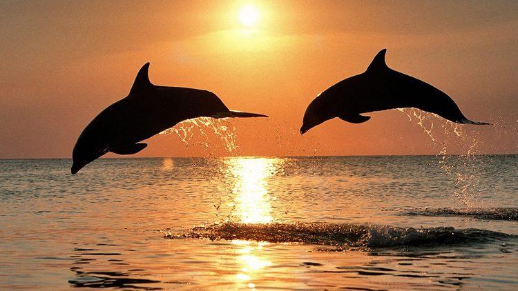 Barcelona liberará a los delfines de su zoológico