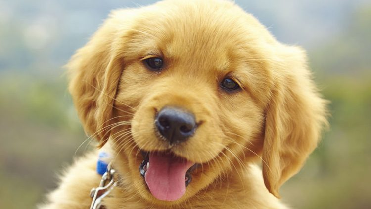 Descubren Cómo Debemos Hablar A Los Perros Para Que Nos