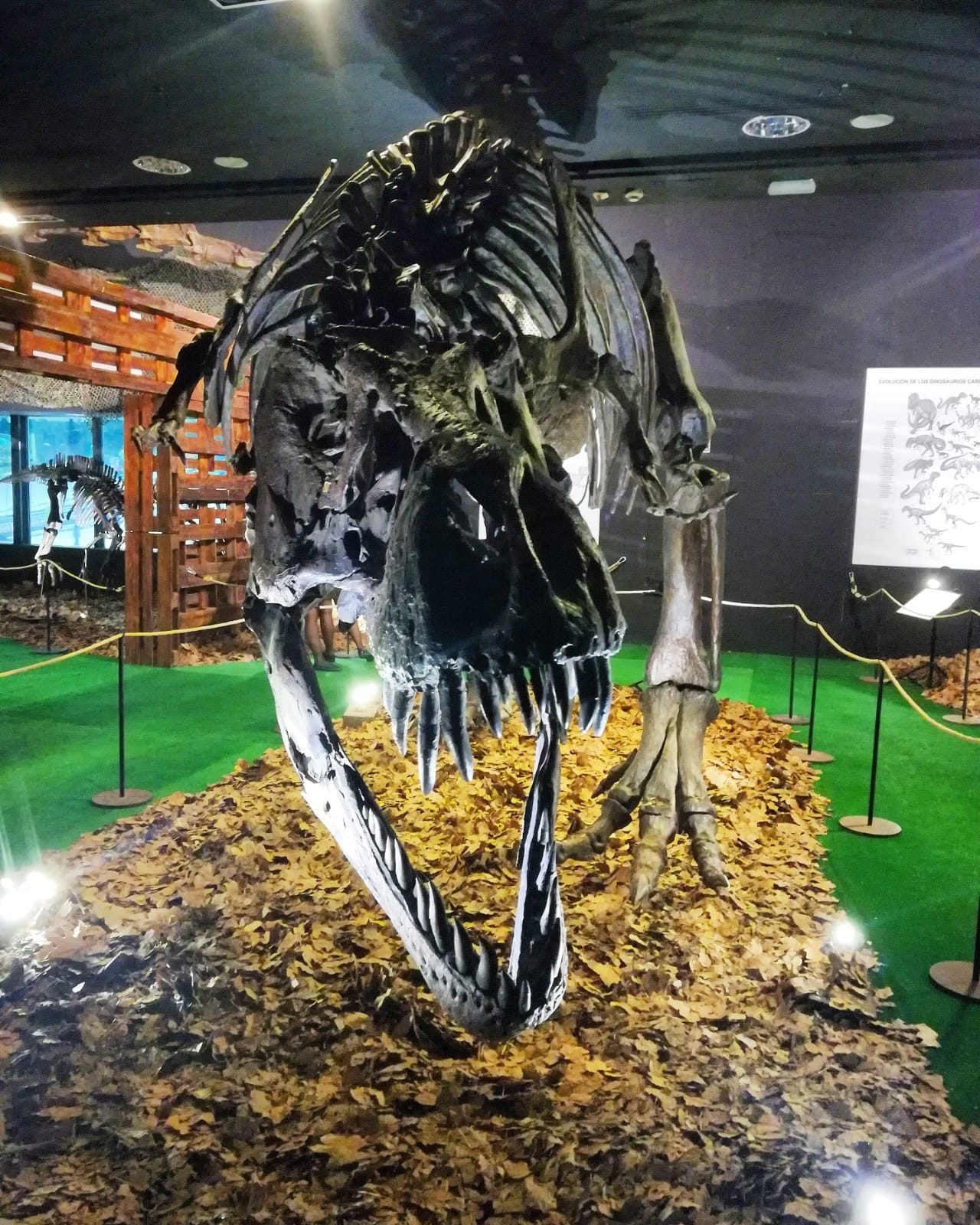 Dinopétrea
